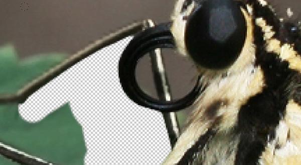 Hướng dẫn sử dụng Photoshop CS5 - Phần 10: Sử dụng Layer Mask và Vector Mask để xóa ảnh nền
