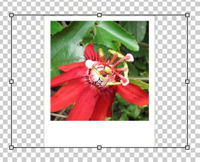 Hướng dẫn sử dụng Photoshop CS5 - Phần 17: Xử lý ảnh hàng loạt với Photoshop Actions