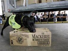 """Malaysia: Treo thưởng cho kẻ cắt đầu """"chó chống đĩa lậu"""""""