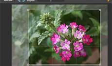 Sử dụng trình biên tập ảnh Photoshop trực tuyến