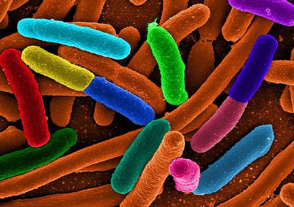 Paint Of COLI: Nghiên cứu cảm biến máy ảnh từ vi khuẩn
