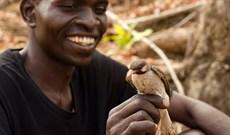 Bí ẩn trong cách giao tiếp giữa con người và loài chim