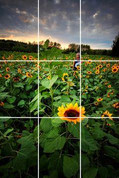 Chụp ảnh trên smartphone nghệ thuật hơn với tỷ lệ 1/3