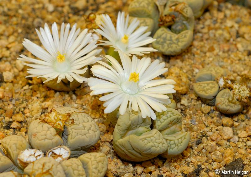 Kết quả hình ảnh cho hoa trong sỏi đá