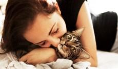 Âu yếm với mèo có thể bị sưng não, nhiễm trùng tim
