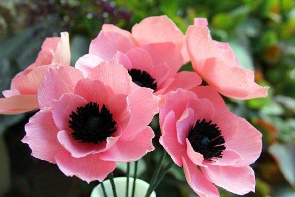 Pink poopy flowers