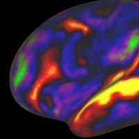 """Mất 1700 tiếng để có thể mô tả não bộ loài """"ruồi giấm"""" bằng hình ảnh 3D"""
