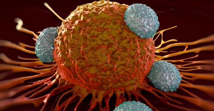 Tìm ra hợp chất có thể diệt 25% tất cả các loại ung thư trong môi trường thử nghiệm