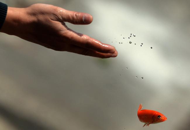 Phong tục cúng cá chép vào ngày 23 tháng Chạp