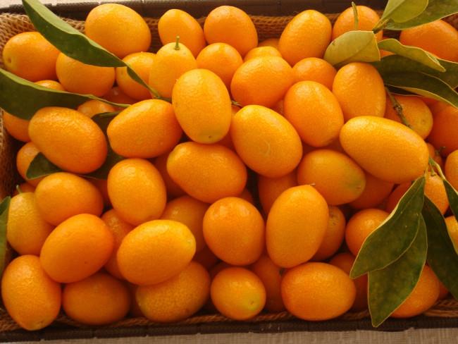 8 loại quả nên bổ sung cho cơ thể vào mùa đông này