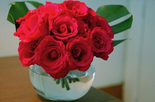 Hoa hồng tượng trưng cho tình yêu và may mắn cho ngày Tết.