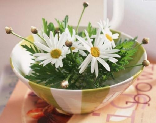 Hoa cúc trắng cũng có thể cắm vào bát
