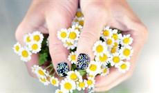 Cách cắm hoa cúc đẹp mang sung túc vào nhà cho ngày Tết 2021