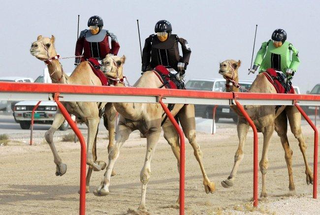 Môn thể thao giải trí là cưỡi lạc đà.