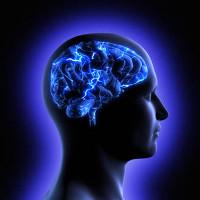 Chuyện khó ngờ: Não bộ có thể sản xuất đường cho riêng mình