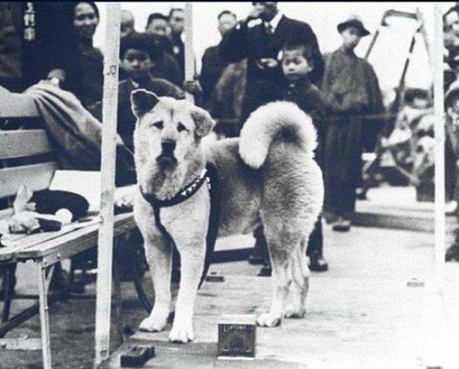 Hachiko the dog
