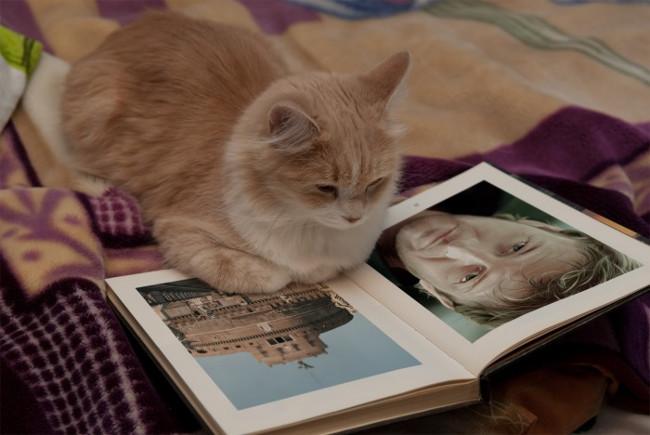 Hiệu ứng chú mèo thông minh