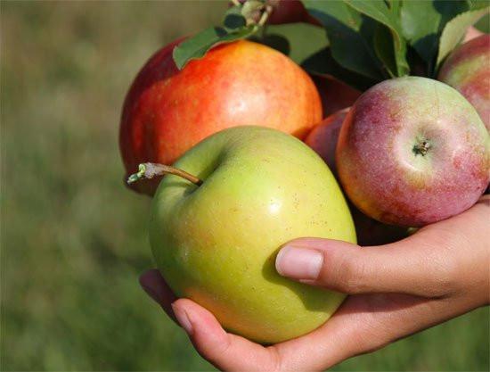 Cách rửa táo đúng cách