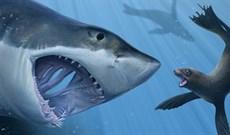 """Cận cảnh màn ăn tươi nuốt sống con mồi đáng sợ của """"sát thủ đại dương"""""""