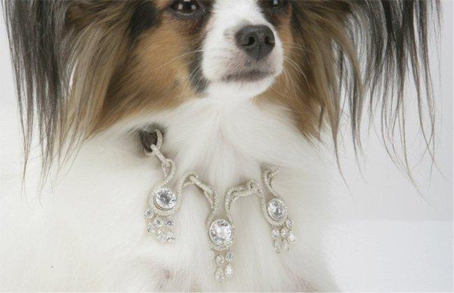 Vòng cổ kim cương 3 triệu USD dành cho chó