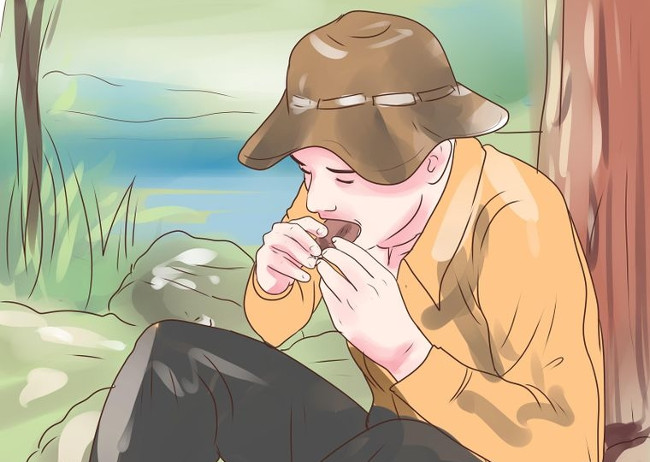 Tìm nguồn thức ăn an toàn