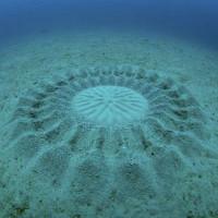 Sự thật bất ngờ đằng sau những vòng tròn kỳ lạ dưới đại dương khiến các nhà khoa học giật mình