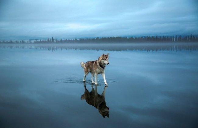 Chú chó không trọng lực là đây!