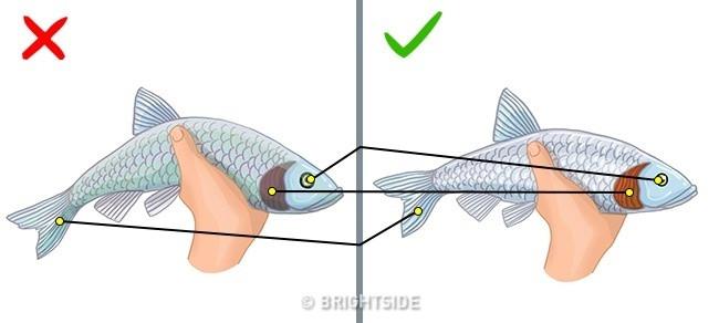 Nhìn vào mắt cá