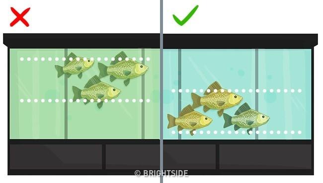 Vị trí bơi của cá