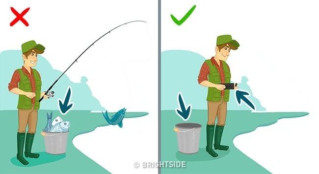 Đo mức độ thủy ngân có trong cá