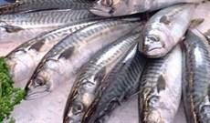 Mẹo đơn giản giúp bạn dễ nhận biết cá tươi, ngon