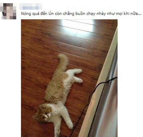 Động vật cũng mệt mỏi