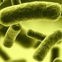 Ngộ độc thịt Botulinum, căn bệnh nguy hiểm mà ai cũng có thể mắc phải nếu không cẩn thận