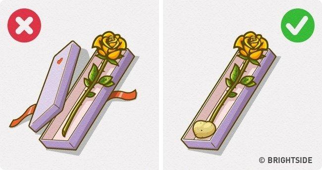 Cách bảo quản hoa tươi mà không cần nước hay ánh sáng
