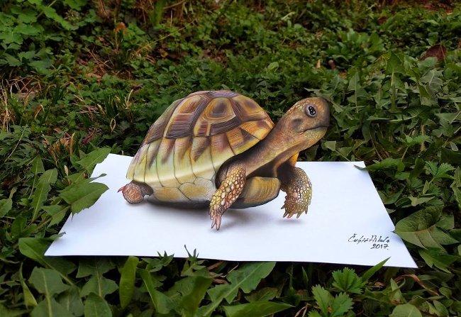 Bản vẽ 3D rùa