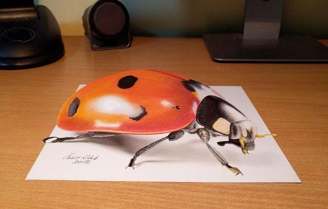 Bản vẽ 3D bọ cánh cứng