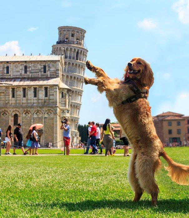 Đến cả chú chó cũng hí hoáy ra đỡ tòa tháp