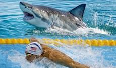 Kình ngư Michael Phelps bơi thi với cá mập trắng: Ai thắng?