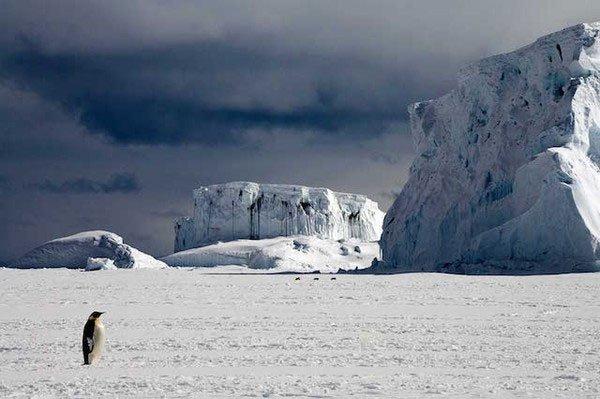 Chim cánh cụt lại sống Cực Nam, nơi không có sự xuất hiện của những kẻ săn mồi, còn gấu trắng là kẻ thống trị vùng Bắc Băng Dương