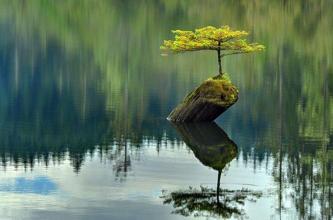 Bạn đã bao giờ nhìn thấy cây cọ như thế này chưa?
