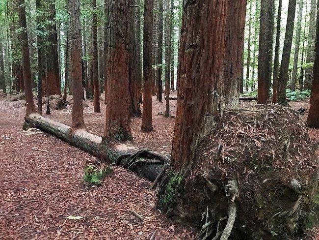 Tree Of Life - Cây sự sống