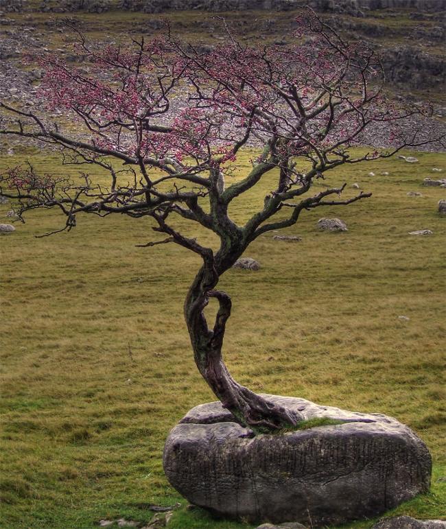 Đây có lẽ là biển báo đặc biệt nhất thế giới: cây mọc xuyên bên trong cột
