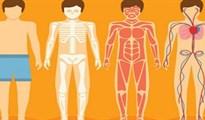 Cơ thể con người và những con số khổng lồ khiến bạn giật mình