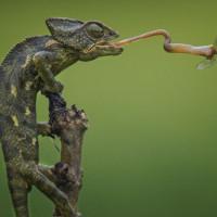 8 bức ảnh thiên nhiên đẹp nhất tháng 11 do National Geographic bình chọn