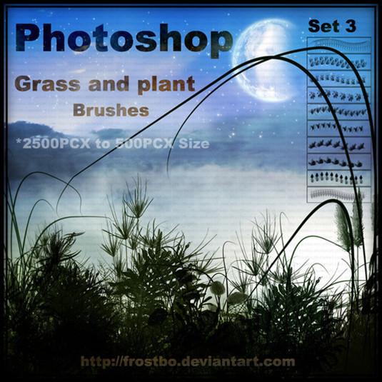 Brush cỏ và thực vật