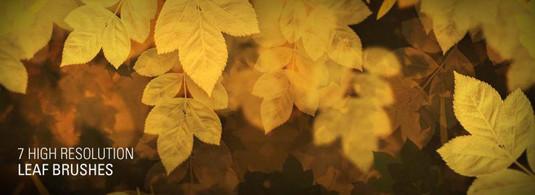 Brush lá bị cô lập với các chi tiết phức tạp