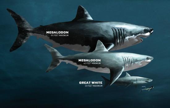 So sánh kích cỡ cá mập hiện đại với các loài thượng cổ như Megalodon