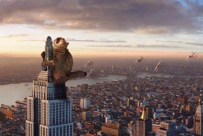 Cat Kong: Thím mèo ăn vạ trên nóc thành phố