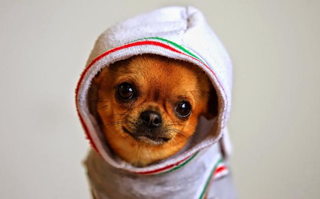 Bộ hình nền những chú chó đáng yêu cho máy tính 11