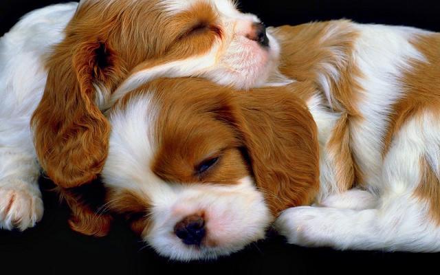 Bộ hình nền những chú chó đáng yêu cho máy tính 2
